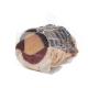 Magret de canard fourré au foie gras mi-cuit